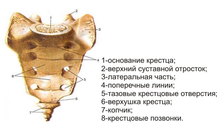 Крестцово
