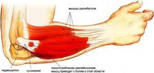 мышцы локтевого сустава