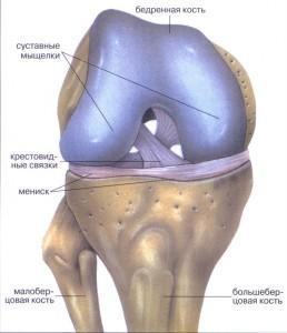 povregdenie-meniska-kolennogo-sustava