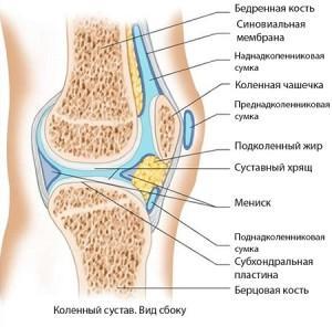 коленный сустав: вид сбоку