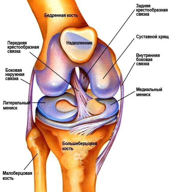 Чашеобразный сустав полиартрит коленных суставов