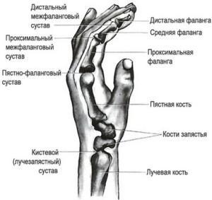 сустав руки
