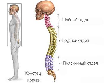 Остеохондроз кресцово-поясничного отдела